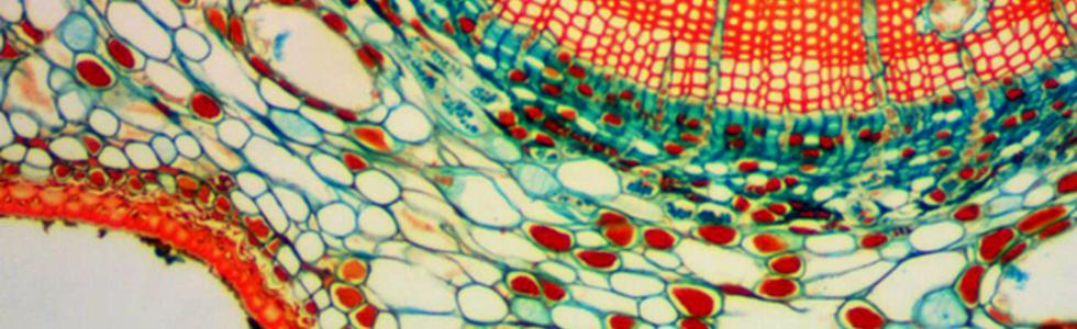 Подкожная жировая клетчатка под электронным микроскопом
