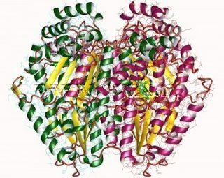 Наиболее важным химическим компонентом кожи является белок – полипептид, образующийся в результате конденсации аминокислот.